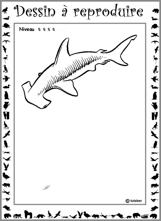 Dessiner un requin marteau niveau 4 for Comment dessiner un requin marteau